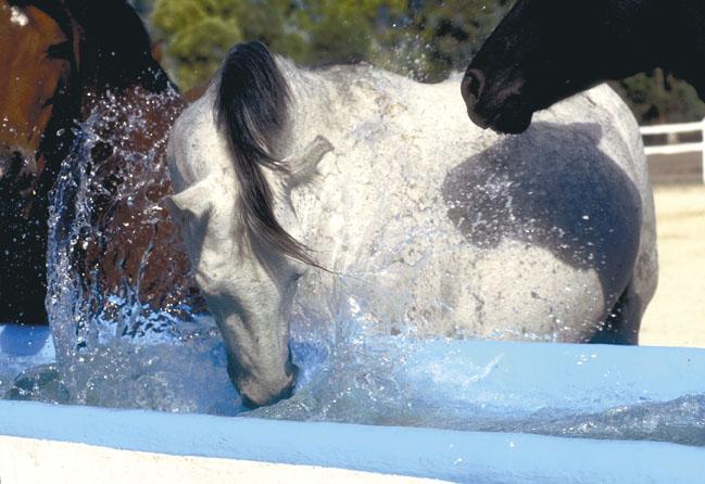 Horse splashing in water, Jerez, Spain