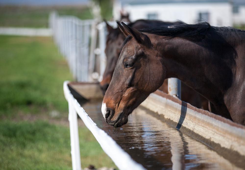 warm weather feeding horses