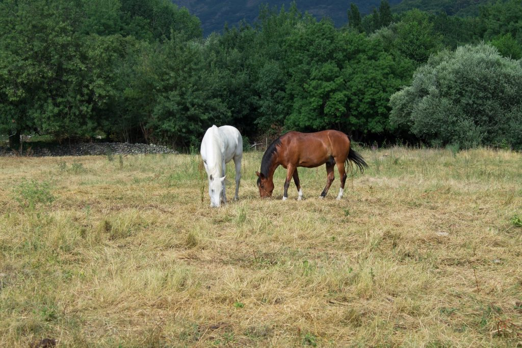 horse forage