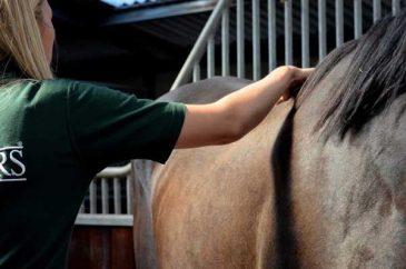 feed advice for horses