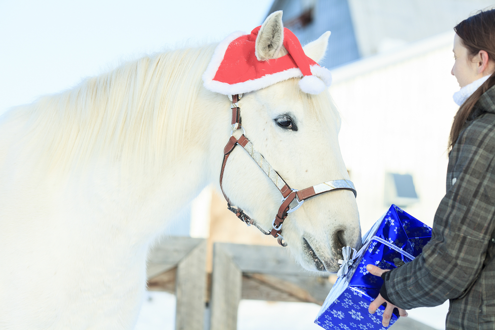 christmas gifts for horses