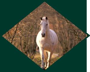 Senior Horse