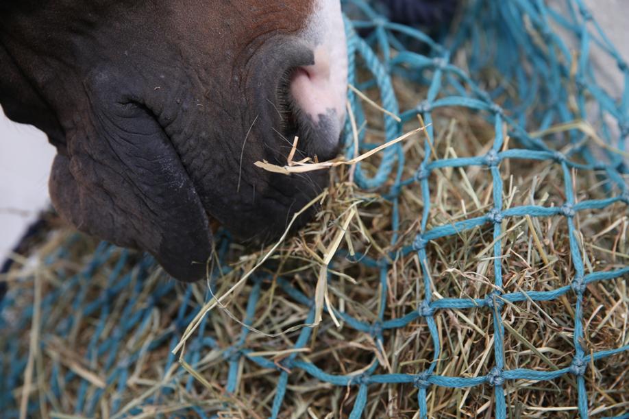 "1/"" Tight Holes Slow Feeder Greedy Feeder Haynet Haylage Small Hay Net"